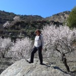 Blossomed almond trees along the route from Berchules to Cadiar